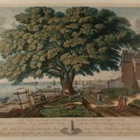 The Great Elm Tree of Shackamaxon (Now Kensington)